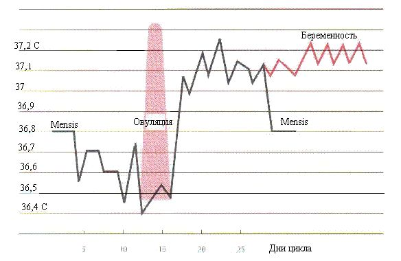 analnaya-temperatura-pri-ovulyatsii