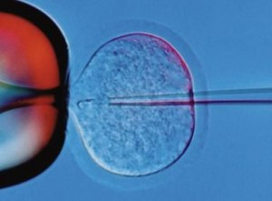 Проникают ли сперматозоиды через ткань
